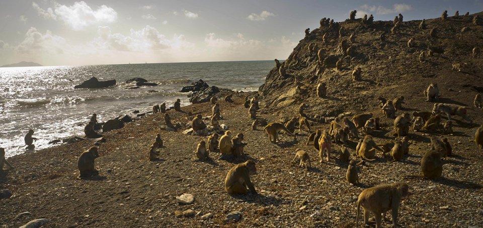 cayo santiago monkey island puerto rico