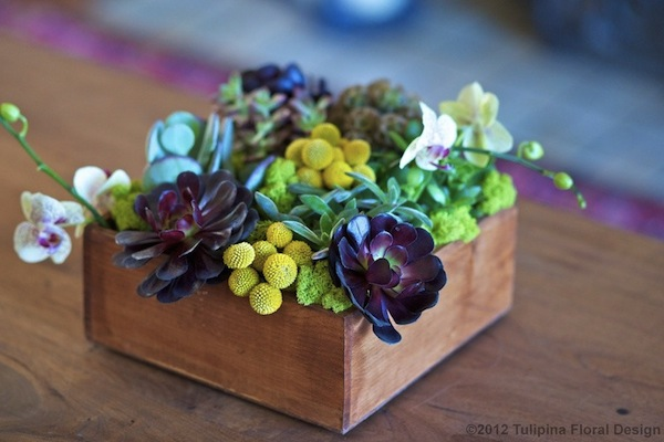 wood box with succulents