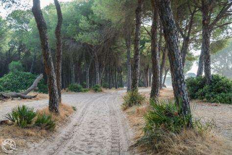 Qué ver en Huelva-12