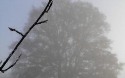 Week end dans le Perche : Brouillard