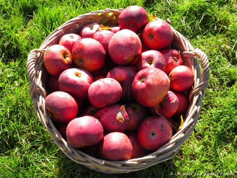 Les Pommes Calville du Perche