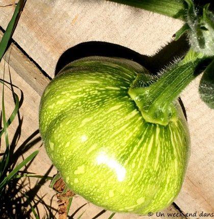 potirons du jardin potager