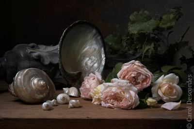 antiquaire-photographe-nature-morte-nacre