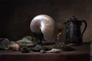antiquaire-photographe-nature-morte-nautile