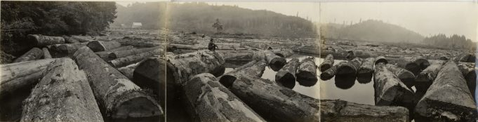 Original Caption: Spruce Production Division, Bureau of Aircraft Production. Over 4,000 feet of spruce logs awaiting completion of the Division mill at Toledo, Oregon. Local Identifier: 165-WW-206A-50