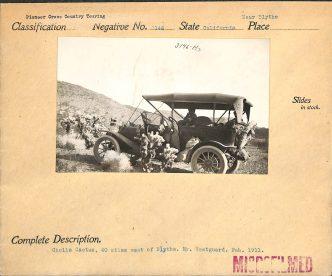 """Local ID: 30-N-03146 (Box 269) """"Cholla Cactus, 40 miles west of Blythe. Mr. Westguard. Feb. 1911."""""""