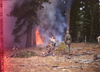 342-C-K3724 NAID: 148728134 Original Caption: Operation Firefly - Paratroopers of the 555th Parachute Infantry dropped by Troop Carrier Command fight a forest fire in a remote area of the Umatilla National Forest, Oregon.