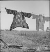 """Original Caption: """"San Lorenzo, California. Washday 48 hours before evacuation of persons of Japanese ancestry from this farming community in Santa Clara County. Evacuees will be housed in War Relocation Authority centers for the duration."""" Photographer: Dorothea Lange. Date: May 5, 1942. Local ID: 210-G-C193 (NAID 537542)"""