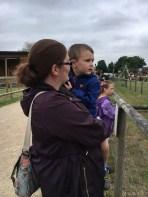 Watching the sheep race