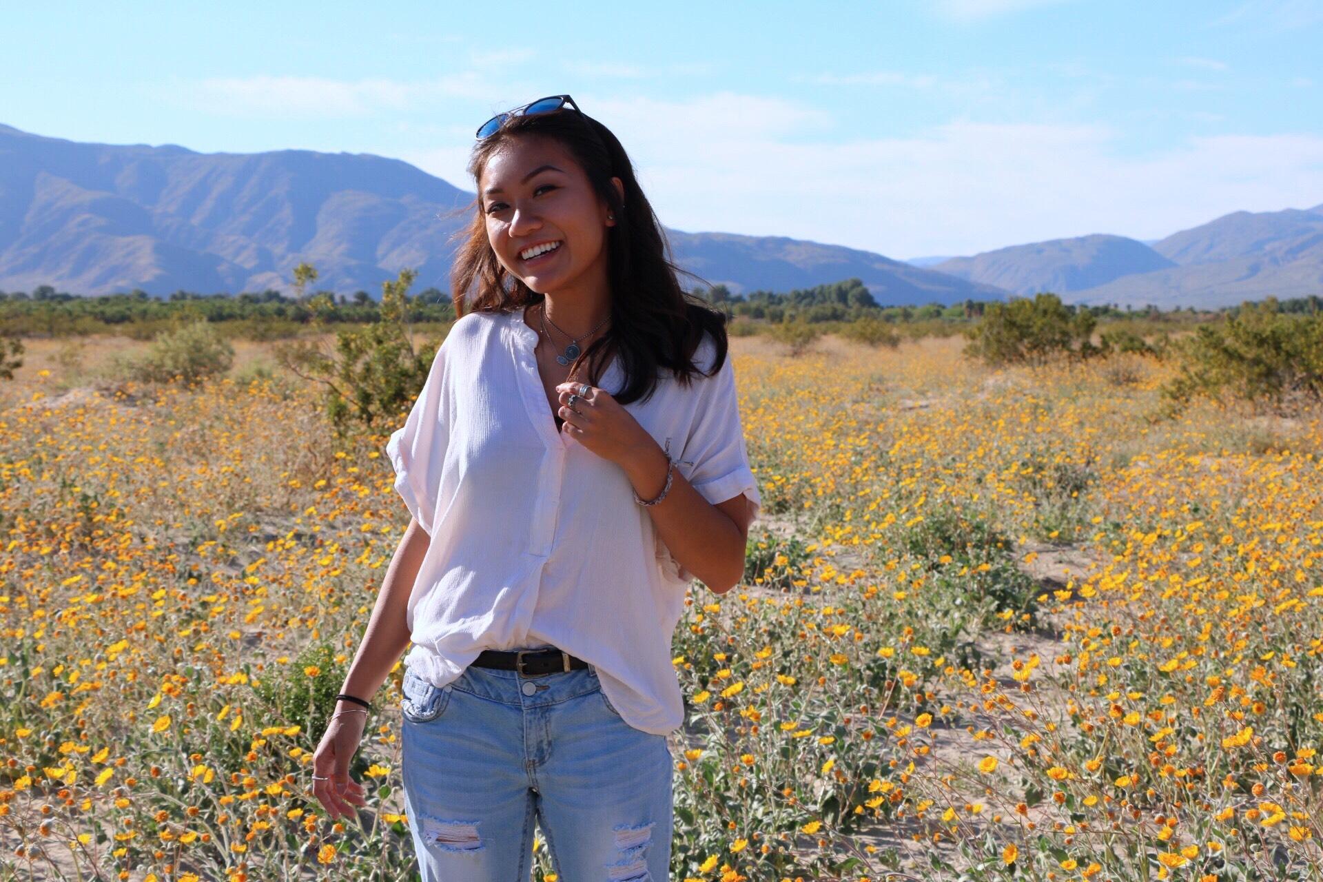 seas of flowers bloom in the desert u2013 usd student media