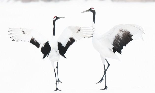 """""""Fragile"""", dal 26 marzo la bellezza della Natura, magica e delicata, nelle fotografie di Barbara Dall'Angelo"""