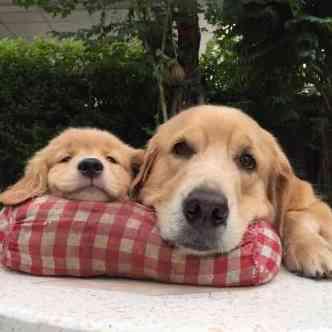 可愛い犬の画像