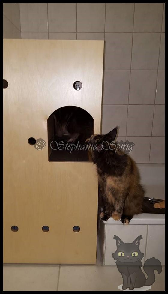 Bild-Url: http://up.picr.de/24297780yu.jpg