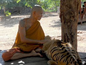 A monk plays with a tiger cub's paws.