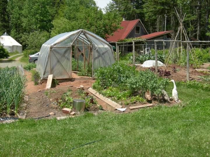 photo of an organic vegetable garden at an organic farm in Prince Edward Island