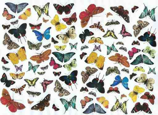 Butterfly decoupage paper
