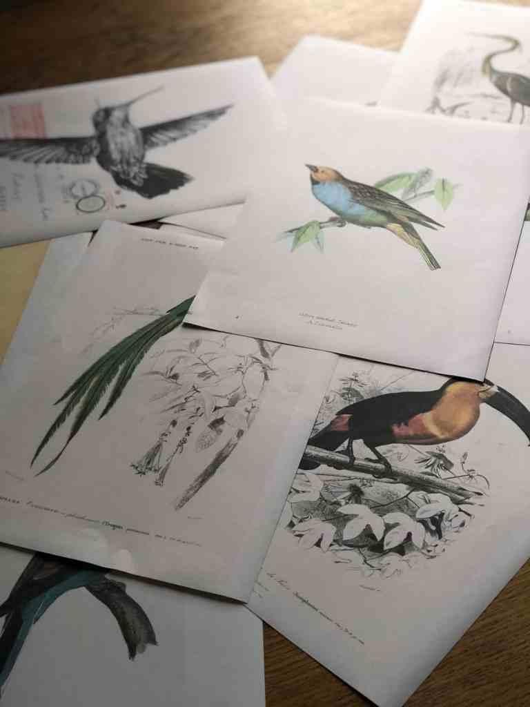 free printable vintage bird illustrations