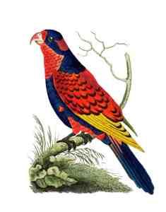 free vintage bird printable illustration