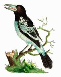 black and white bird illustration