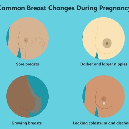 BREAST AND CERVICAL CHANGES DURING PREGNANCY