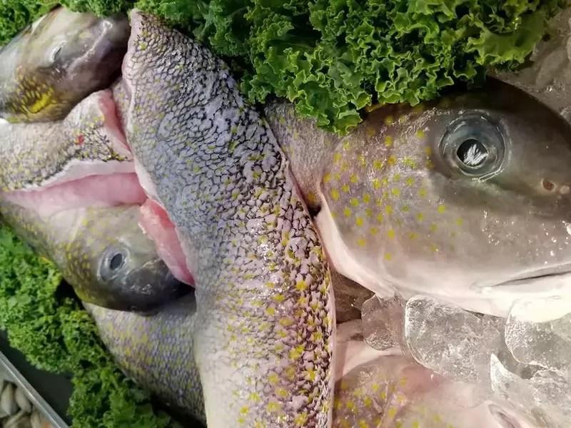 Swanson's Fish Market