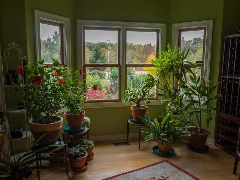 Plants to Beautify Your Home