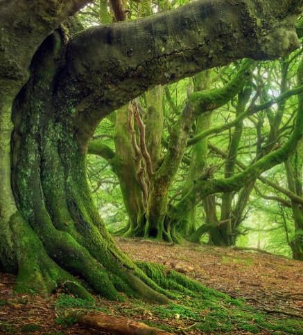UPDATE SA- Tree of life