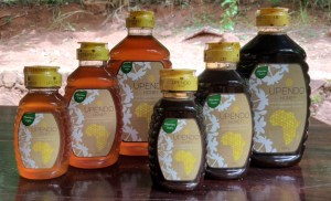 Packed honey range