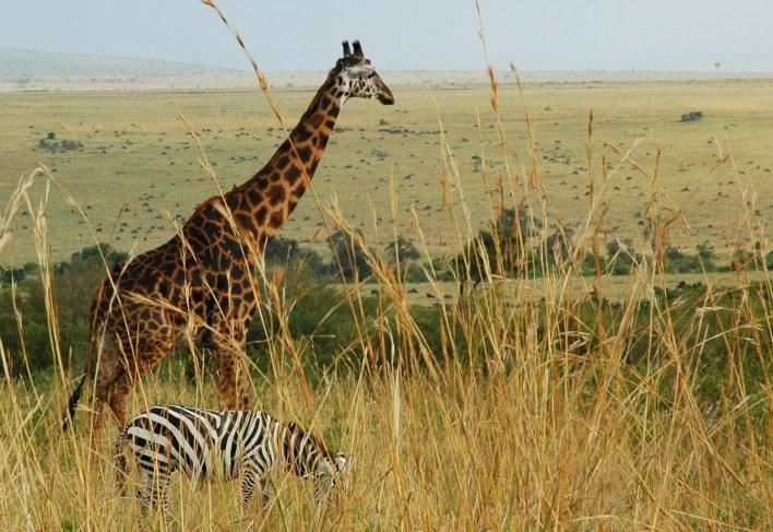 earn citi thankyou points safari