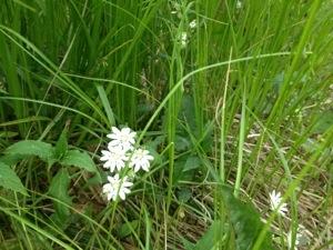 white-flower-petals-cosby-smokies