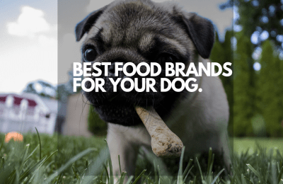 BEST FOOD BRANDS FOR YOUR DOG