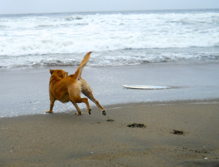 Off-leash on the beach. They're way ahead in SF.