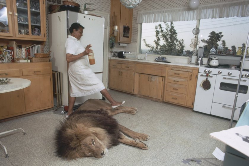 In The Kitchen With Neil The Lion