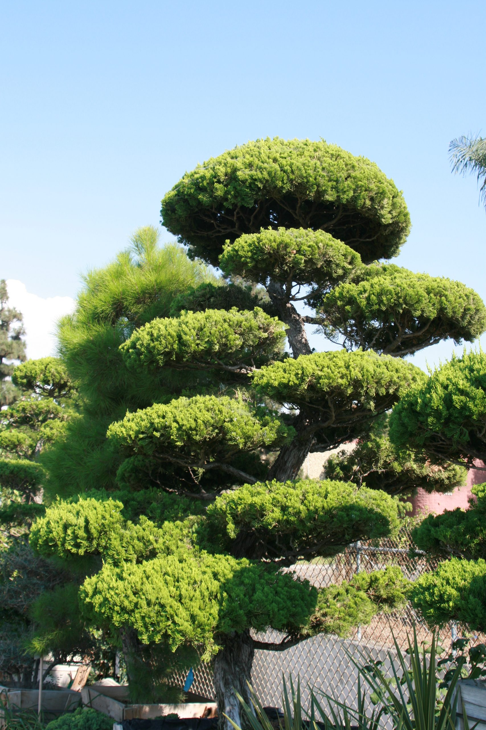 You are currently viewing BONSAI AND RELATED