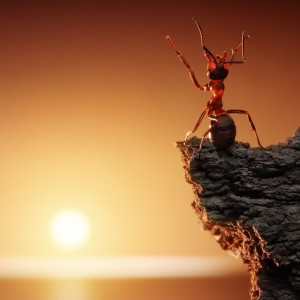 Ant Looking at the Sun