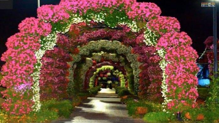 【视频】世界最大花园!迪拜【奇迹花园】,让你沉浸在满满的花海之中!(视频截图)