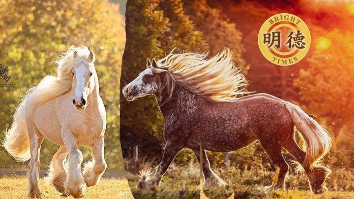 世界上最惊艳的马:吉普赛马(明德合成)