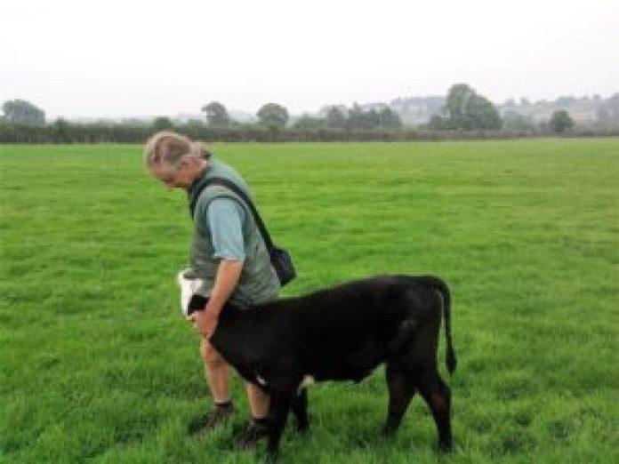 農場主人傑伊跟他的小乳牛。圖/FB:Bradley Nook Farm