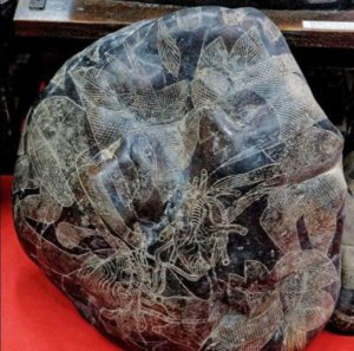 表现心脏移植的史前刻石。 (明慧网)