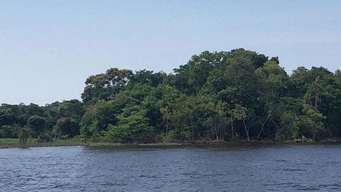 科学家们发现, 亚马逊地区的树木自己制造雨水(ins)