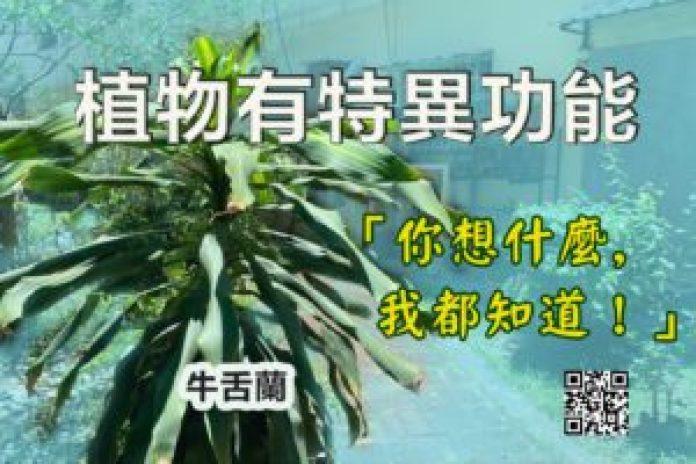 植物有特異功能(明慧叢書臉書)