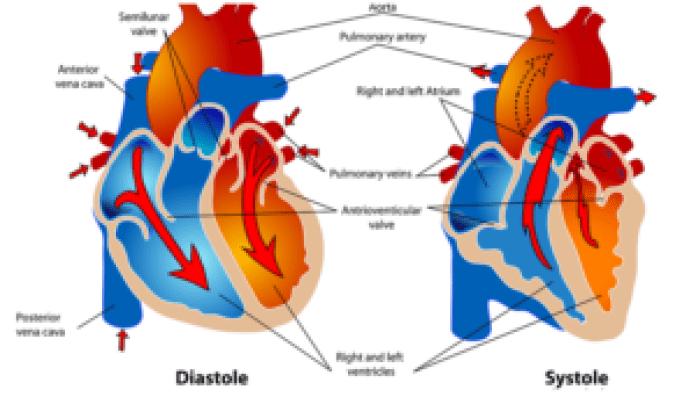心血管疾病(pixabay)
