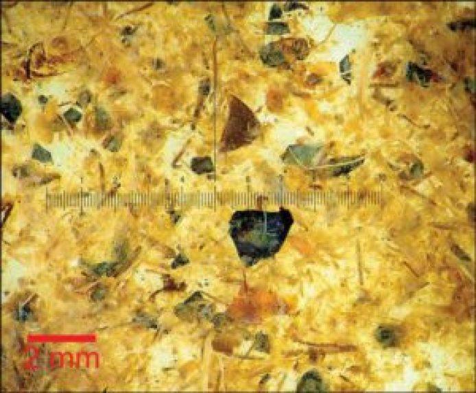 Tollund人的肠道内容物的显微照片。(P. S. Henriksen - 丹麦国家博物馆/Antiquity Publications Ltd )