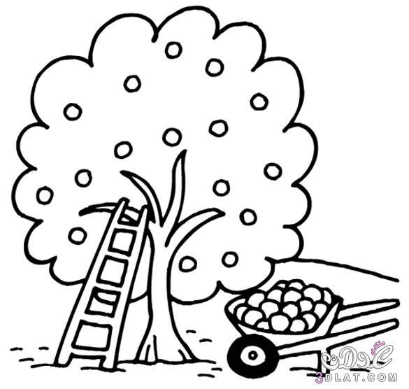صور رسومات أشجار لمحبى التلوين صور اشجار صور رسومات اشجار