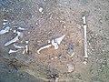 بقايا عظام في قصر منيف في تربة البقوم 1.jpg