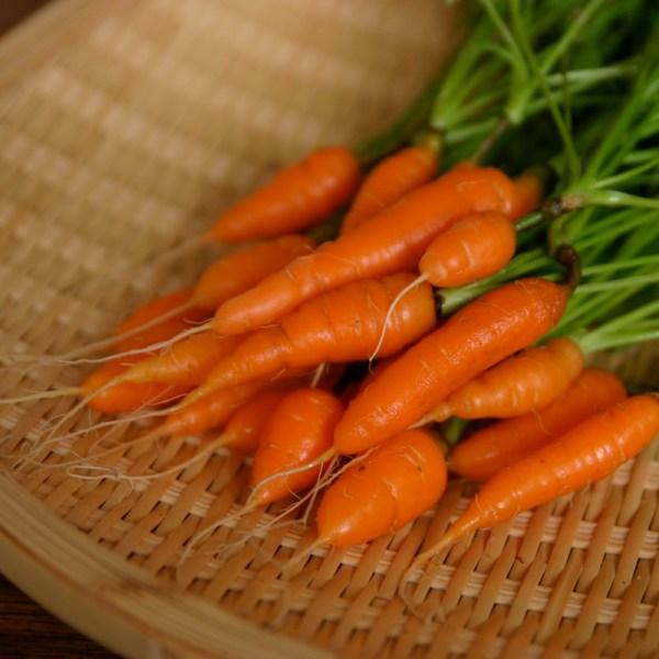 Baby carrot Wikipedia