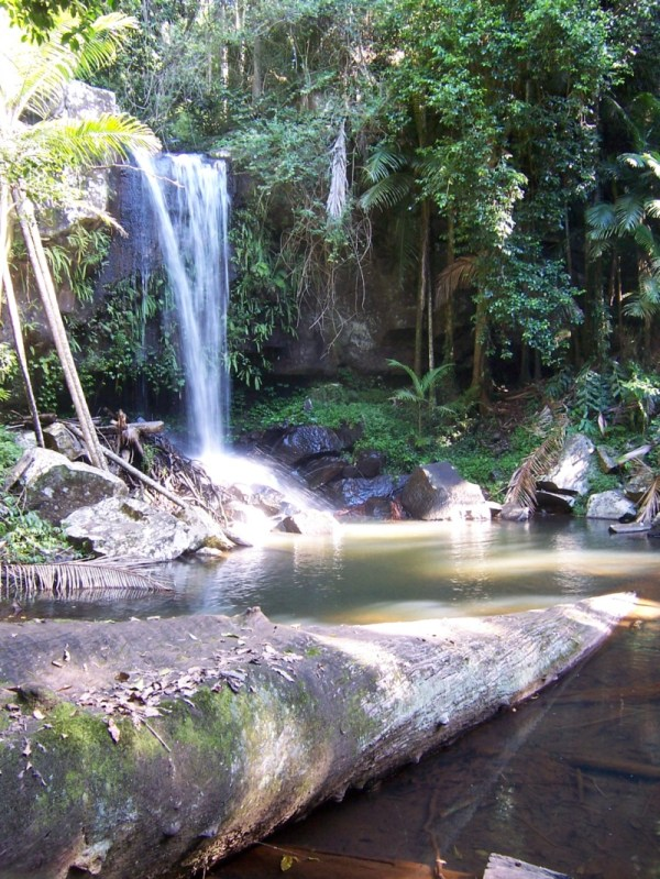 Tamborine National Park Wikipedia