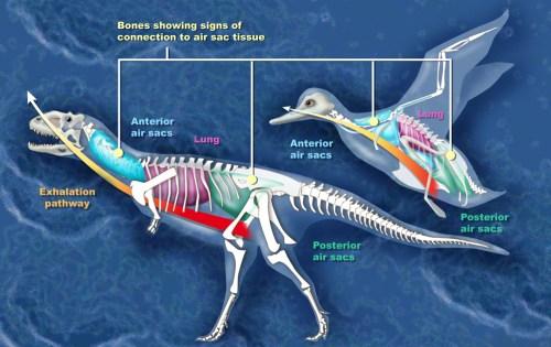 https://i1.wp.com/upload.wikimedia.org/wikipedia/commons/0/05/Dino_bird_h.jpg?resize=500%2C315&ssl=1
