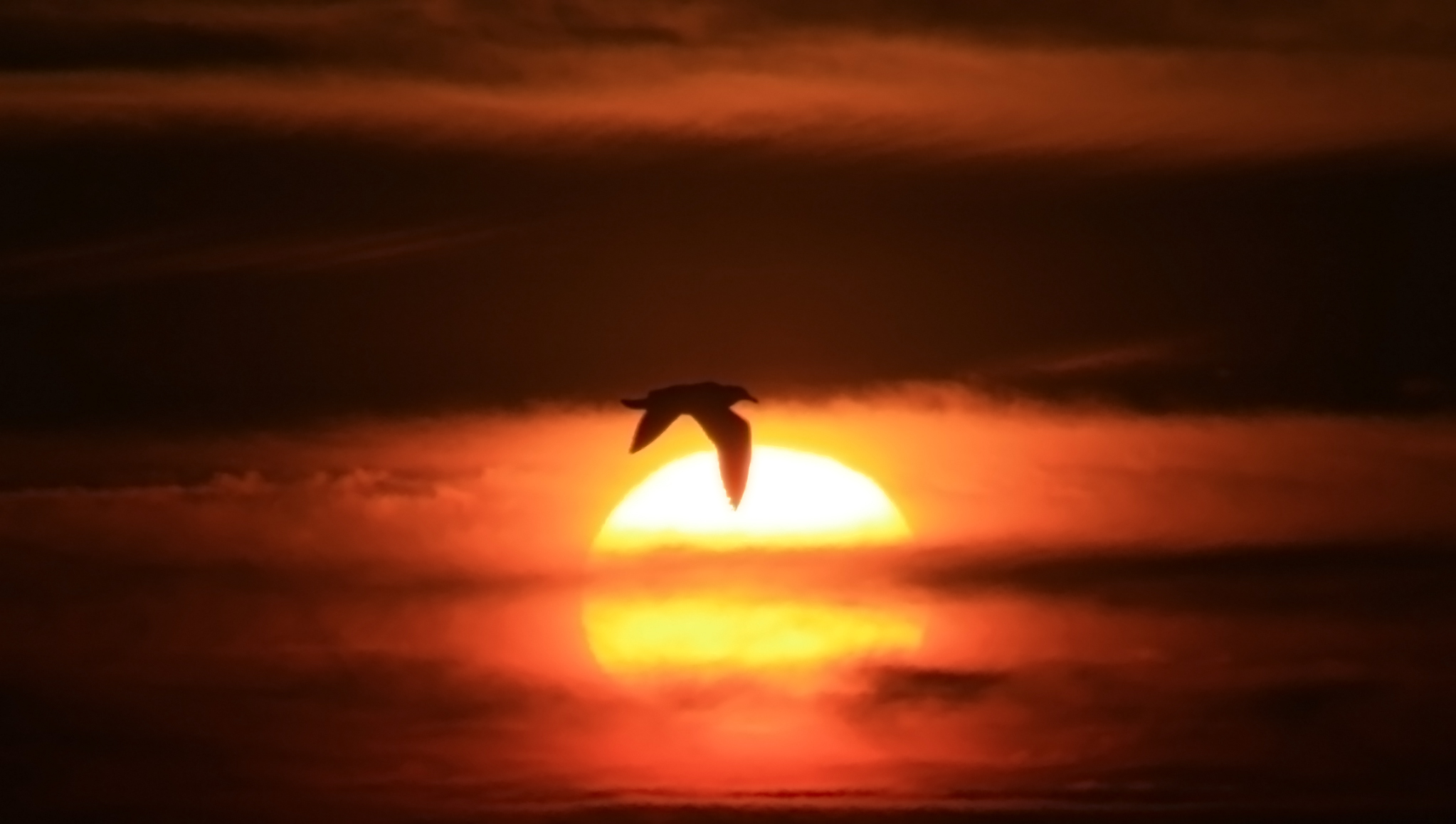 English: Silhouette of a bird over the Sun