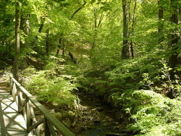 Pålsjöskog